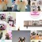 兰州宠物美容培训|甘肃宠物美容培训|兰州宠物美容学校